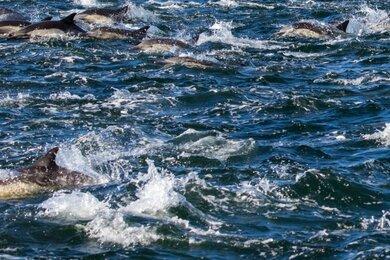 """На фото с дельфинами есть лицо человека. Это случай из разряда: """"Я сначала не видел, а потом как закричал"""""""