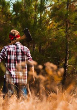 Плотник ударил дерево, а из него полилась кровь. Но отменять веганов рано: это трюк, задуманный самой природой