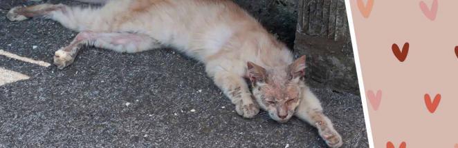 Бродячий кот выживал на улице, а попав к хозяину, преобразился. Фото после доказали: домашний уют творит чудо