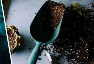 Фермер собрал урожай, а он оказался внеземным — буквально. Кларка Кента рядом не было, но учёные заинтригованы