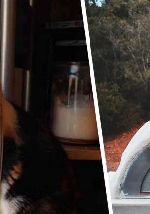 Кошка помогла хозяевам почистить печку и пропала. Вместо своей белой питомицы пара нашла у себя домовёнка Кузю