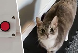 Хозяйка забыла, как мяукают кошки, ведь её хвостатая умеет разговаривать. Ваш питомец так точно не может