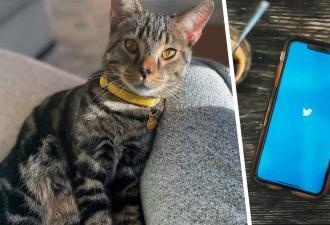 Хозяин твитнул фото кота и приманил доход. Цифровой клон питомца продан, но валюта за него впечатлит немногих