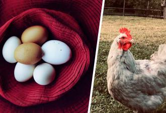 Пользователь Reddit поделился фото яйца, которое снесла его курица. Люди сразу поняли – несушка из России