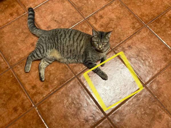 Хозяйка уронила кусок курицы на пол и пригвоздила ею кошку. От плитки животное не может отойти уже год