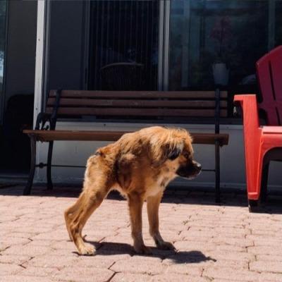 Хозяйка показывает свою собаку и ломает зрителей. Ведь животное попало на панорамный снимок и застряло в нём