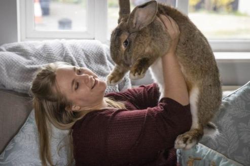 Соседки пришли в зоомагазин и выбрали двух крольчат. Обман выявили поздно, когда животных уже было не поднять