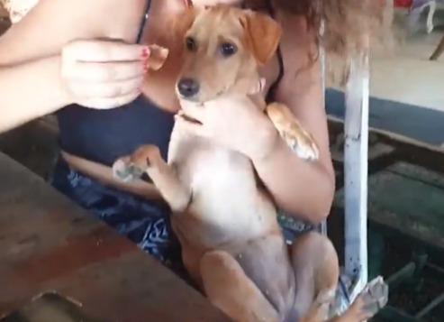 Лысый щенок еле двигая лапками вышел к прохожим. Они не прогадали, приютив его, но он вырос в другое животное