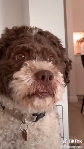 Хозяйка показала, как смотрит на неё собака, и сломала людей. Ведь они уверены, что внутри пса заперт человек