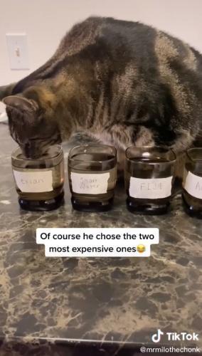 Хозяйка показала, как выбрать воду правильно. И её кот-гурман - лучший дегустатор