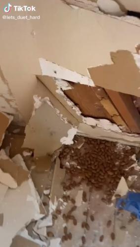 Хозяин разобрал стену в хижине, а оттуда посыпались сокровища. Не для людей, а для пушистых, присвоивших себе дом