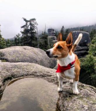 Пёс лаял и пытался увести хозяина в лес, пока тот не согласился. Через пять минут он уже вызывал спасателей