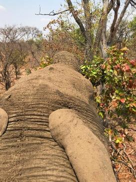 Что видит слон с высоты собственного роста. Блогер провёл день с этими гигантами и показал саванну их глазами