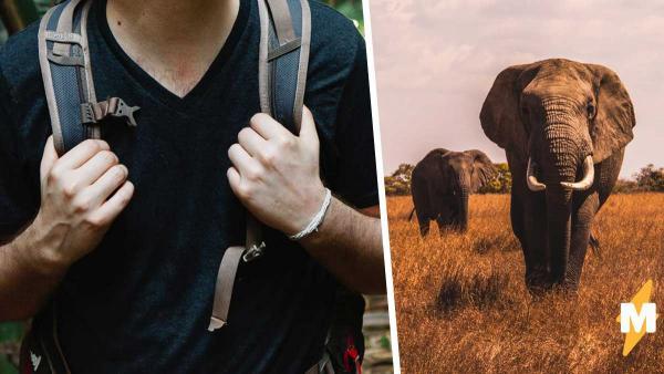 Блогер провёл день со слонами, рассказав о проблемах гигантов. Кажется, мы недооценивали этих зверей