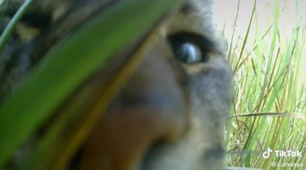Хозяйка повесила на кота камеру, чтобы узнать его секреты. Двуногие плачут: барсик живёт интереснее их