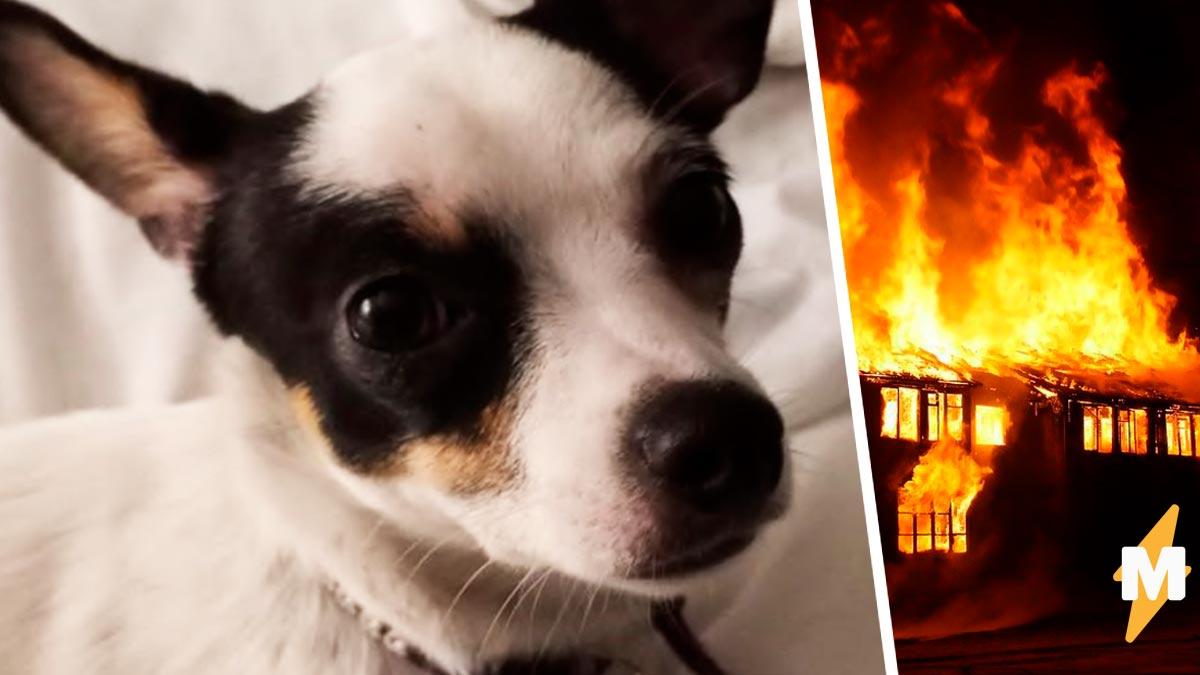 Не верите в пророчества Самое время начать  хозяину приснилась пропавшая собака, а затем повторила сон наяву