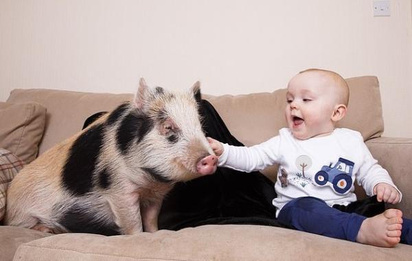 Мама подумала, что сыну необходима Свинка Пеппа. Правда, её версия совсем не похожа на героиню из мультика