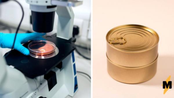 Учёный рассмотрел консервированный тунец под микроскопом. После этого люди не хотят добавлять рыбку в салат