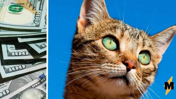 Хозяйка показала, как выглядит котя за полмиллиона рублей. Люди уже оценили пушистую, но эмоций на копейку