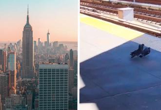 В Нью-Йорк ворвалась новая банда, но это не люди. Члены группировки — голуби, и их жестокости позавидует мафия