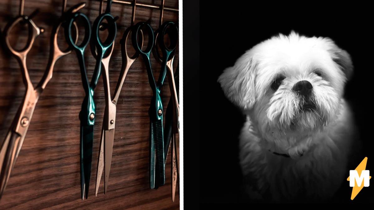 Хозяйка постригла собаку, а вышел смех сквозь слёзы. Грумер подарил псу чёлку свидетеля из Фрязино