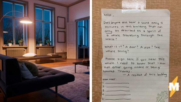 Девушка слышала какие-то странные звуки в доме и оставила объявление. Теперь она переезжает