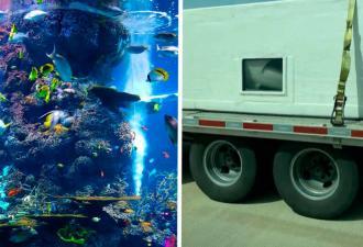 Тиктокерша показала, как перевозят акул, и люди недовольны. Дело не в испуге — они переживают за хищников