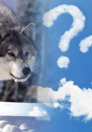 Гости зоопарка в Китае пришли смотреть на волка, но в клетке сидел другой зверь. Он явно не выступает в цирке