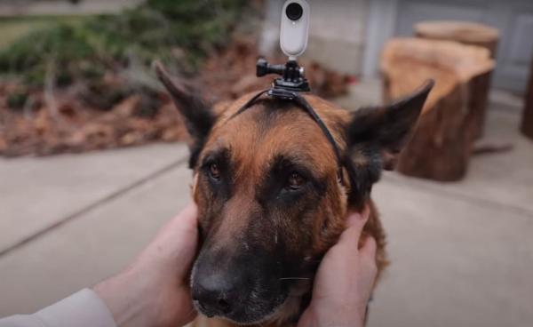 Хозяин надел камеру на собаку и показал день глазами пса. Осторожно, разрыв шаблонов - мы недооценили пёсий ум