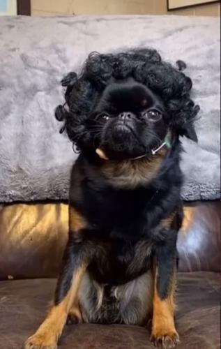 У пса Чико - самая пафосная мордашка среди собак. Расступитесь, двуногие, у этого животного нет хозяев