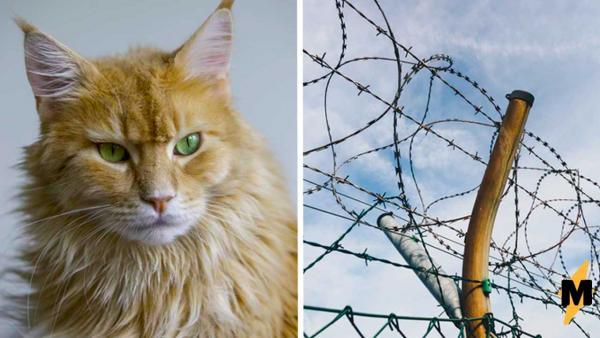 Хозяин сделал кошачью тюрьму, чтобы питомцы не сбежали из дома. Но любимцы переиграли человека и уничтожили