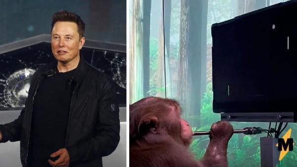 Илон Маск показал, как обезьяна играет в пинг-понг силой мысли. Она не джедай, у неё просто есть чип Neuralink