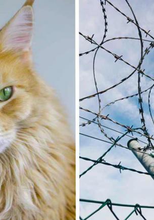 Хозяин показал, как обездвижить котов, чтобы не выбегали из дома. Его кошачий Азкабан сдержит всех кис (почти)