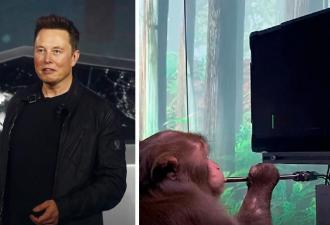 Обезьяна с чипом Neuralink на видео силой мысли рубится в игры. Илон Маск только рад, а вот людям уже тревожно