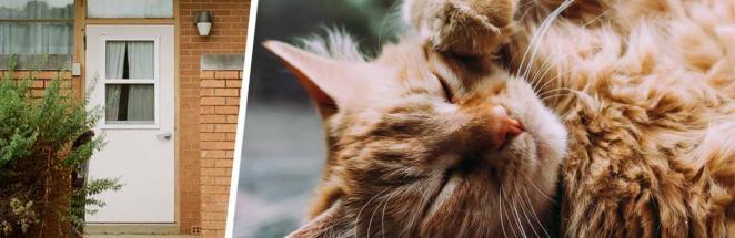 Муж поймал напавшего на жену кота и стал героем. Опознав зверя, он понял, что едва не стал вдовцом