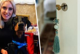 Хозяйка гадала, как пёс выбирается из закрытой комнаты. Камера дала ответ — её питомец стал учеником Гудини