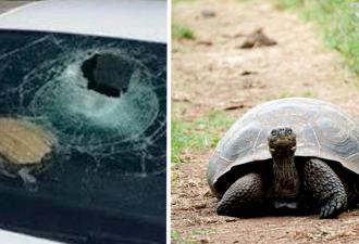 Спасатели не верили в летающих черепах, пока сами не увидели одну. Они такие быстрые, что могут разбить машину