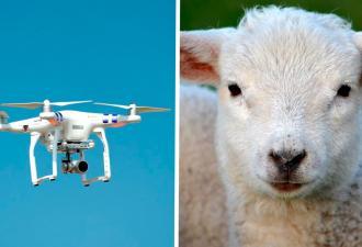 Робоапокалипсис откладывается, у человечества есть тайное оружие против машин. Спойлер — это обыкновенные овцы