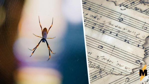 Пауки теперь умеют писать музыку паутинами, правда с помощью учёных. И их треки самое то для фильмов ужасов