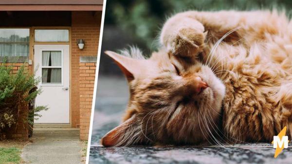 Муж поймал напавшего на жену кота и стал героем. Ведь узнав, кем было животное, он понял