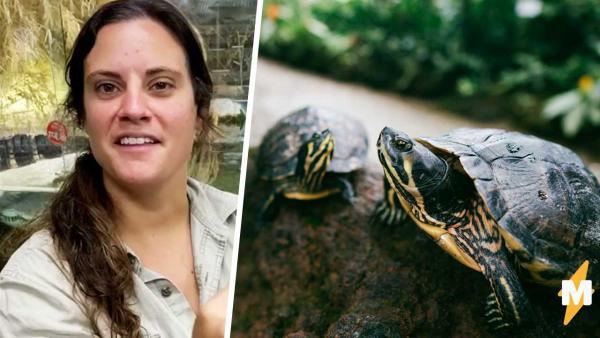Сотрудница зоопарка показала столетнюю черепаху, и народ видит в ней динозавра. Тут замешаны гены Годзиллы