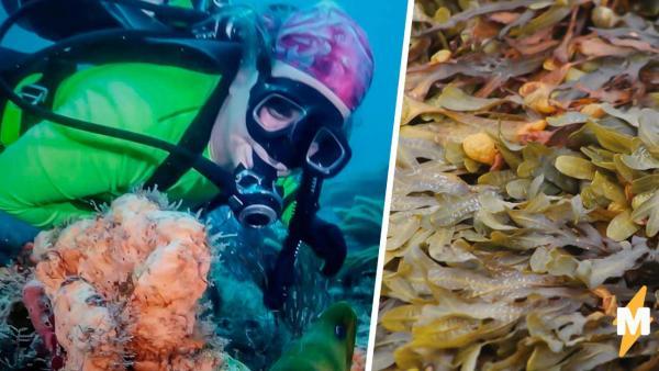 Дайвер думала, что увидела ходячие водоросли, но ошиблась. Это была рыба, и её вид - разрыв всех шаблонов