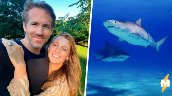 Дочь Райана Рейнольдса любит акул, и папе это не нравится. Объяснить, что хищники опасны помогла Блейк Лайвли