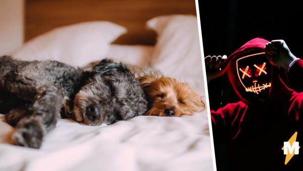 Тиктокер открыл фотошоп и вызвал демона. Это его собака, но она так пугает, что люди требуют удалить эти кадры
