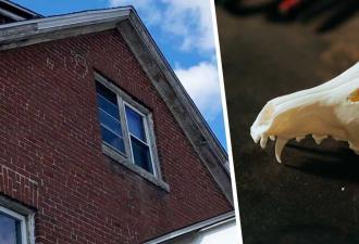 Жилец заметил в доме окно и пожалел, что заглянул внутрь. Всё это время у него был сосед — прямо из хорроров
