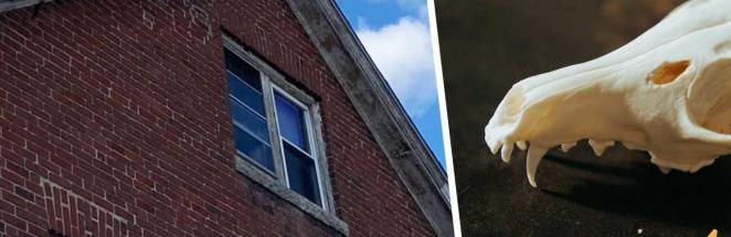Жилец заметил в доме окно и пожалел, что заглянул внутрь. Всё это время у него был сосед – прямо из хорроров