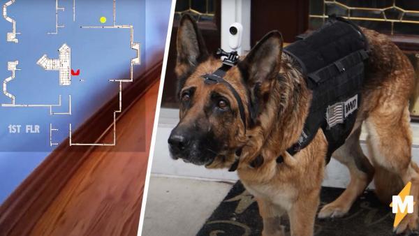 Хозяин надел камеру на пса и показал день его глазами. Стоит увидеть спуск по лестнице - и новая фобия готова