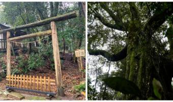 Фотограф снял лес, где 400 лет не было людей, и попал в аниме. Деревья реальны, но потрогать их всё же нельзя