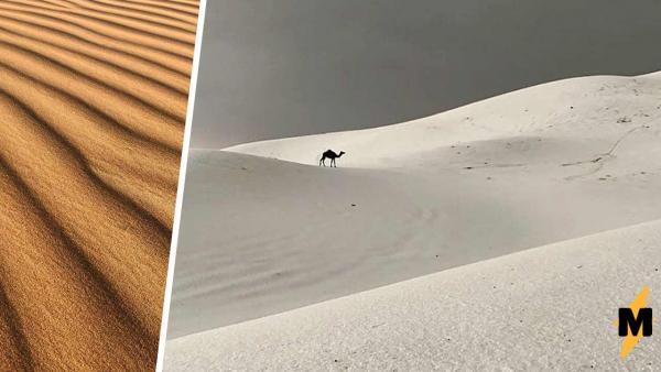 Нет, в Сибири не завелись верблюды, на фото - Саудовская Аравия. Правда, местные жители уже в этом не уверены