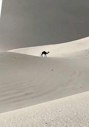Нет, в Сибири не завелись верблюды, на фото — Саудовская Аравия. Правда, местные жители уже в этом не уверены